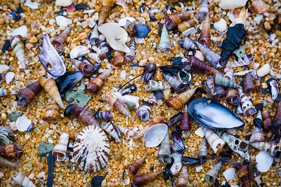 Kaiteriteri Shells