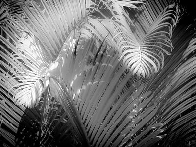 13 Palms - No. 9