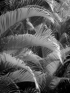 13 Palms - No. 7