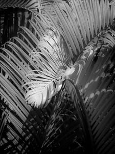13 Palms - No. 2