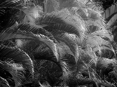 13 Palms - No. 13