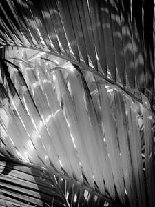 13 Palms - No. 6