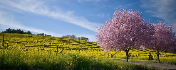 Dry Creek Valley, Sonoma County, California