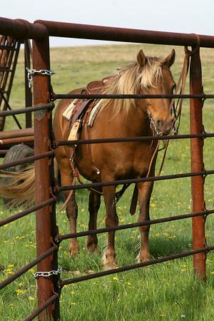 Josephina Sparkles, Sidney's pony