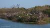 High Island Rookery