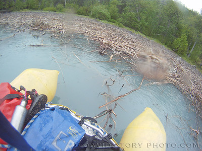 Driftwood piled up along Skilak.