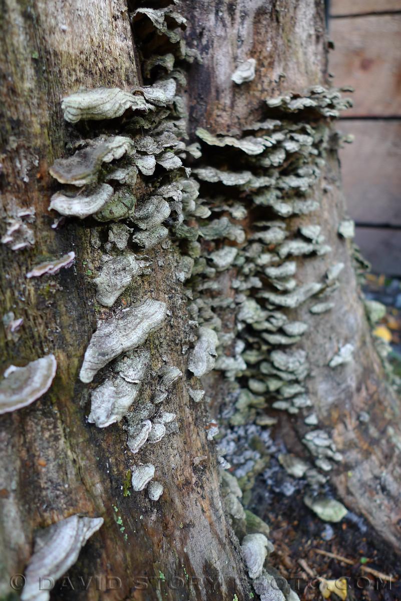 Lichen at Lou's.