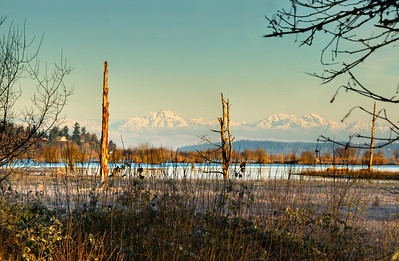 "With dire predictions of perhaps a snowflake or two falling tonight, I may as well stay with the cold theme and go with another shot from the 24° F visit to the Nisqually Delta. Having studied the brochure for the reserve after having visited it, I believe that there was more boardwalk than I found, perhaps because I was so cold that I wasn't watching as carefully as I should have, or maybe because it wasn't yet marked which is what I believe to have been the case. In either event, I now feel required to go down again, when it is both warmer and greener, next month perhaps, and give it another go. In that there are a couple of others who have mentioned a desire to go there, maybe I'll make it a group trek. As I was nearing the end of the existing board walk I couldn't help but notice a shot that reminded me to some degree of a set of goal posts, so, with a bit of maneuvering, I was able to put some snow capped mountains between a couple of leafless, because they are dead, trees. Actually three such trees, so you can decide how you want to work the goal post angle. The mountains are of course the Olympics from a perspective I don't believe I've shared prior. It is a bit busy on the right side; I thought about ""cleaning"" that up but as this is actually an HDR image, the layering aspects of so doing were presenting more of a challenge than I wanted to deal with, so you get it busy. Five shots, all one stop apart; 2 stops under, 1 stop under, ""correct"" exposure, 1 stop over, and 2 stops over. Merged together, you get proper exposure in the shadows, mid-tones, and highlights. Just like with our eyes.  ISO 640; 1266 sec @ f / 9. And yes, I should have reduced the ISO and used a slower shutter speed."
