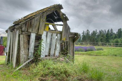 "19 Jul 11. 	Much as I did at my cousin's farm, I shot a lot of HDR sequences during our visit to the Lavender Festival in Sequim, WA on Friday. Our original plans to go on Thursday were altered due to both the weather and contractor availability, so we went Friday vice Thursday in hopes of avoiding the rain. All day long we worked under threatening skies but managed to avoid the water until we had finished our visit and were heading to our favorite local restaurant when the skies began to empty. One local commented that it rains just two days a year in Sequim and it was looking like they were going to get it all that evening!  The image for today was taken at the Cedarbrook Lavender Farm which is up for sale should any of you be feeling like you'd like to get into the business. This is the first of two images I'll share back-to-back, both HDR, but the two quite different. This image is designed to look like a ""normal"" photograph, albeit with both full shadow and highlight detail, which a ""normal"" photograph can't do, at least not at the moment. Tomorrow I'll provide the identical image but processed differently, both with the same software. Keep today's to compare with tomorrow's, side by side, then decide which you prefer. Of course there is no limit to how 'HDR-like' I make them, but yesterday's hay wagon, and tomorrow's shed, are examples of about how far I will generally stray from the realistic, with an occasional exception. ISO 200; 1/321 sec (middle of 5) @ f / 9."