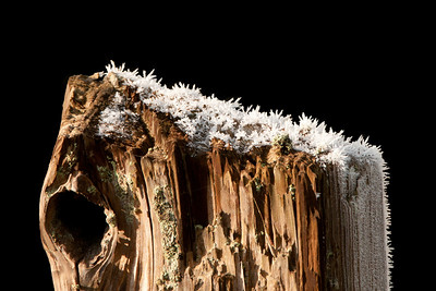 23 Nov 11.  Here is another image from those taken last Sunday of the hoar frost. This fence post was just a couple feet off the road and behind it was an open field of small grasses, basically what remains of a mowed field of hay. I felt the grass was both a bit distracting and that it hid a lot of the detail in the frost, so I removed it and replaced it with just black which I feel sets off the frosted stump fairly well. Still working on mastering this making technique so if you look really close you'll be able to see a few small areas that need improvement, but we are getting close to having a good handle on it. Overall however it is starting to allow me to do some reasonably good isolations. With luck I'll have it under control by the end of the week. ISO 200; 1/320 sec @ f / 9.