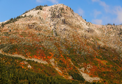 "09 Nov 11.  About 20 minutes prior to taking the shot I shared yesterday this was how the hillsides appeared near the summit of Stevens Pass. The fresh morning dusting of snow gave a mold like appearance to the ground cover, and the color reminded me of the hills I used to pass on my daily drive to MCAS El Toro in S. CA as well as some of the mountains between CA and AZ. Of course the vegetation was very different in both those places, but the colors quite similar. The addition of the snow appears to have affected the behavior of the camera as all the photos I took that have the snow turned out quite sharp, both hand held and tripod mounted, but in the shots I took with just the very brightly colored ground cover none came out razor sharp. I've experienced this problem with all of my digital bodies and multiple lenses, both on and off tripod, and still have not determined what is causing this problem  One of these days I will get it figured out, and when I do, I'll share the answer. In the interim, I'll just have to do the best I can with what I got, such as last week's ""fire and ice."" By the time we returned to this spot in the afternoon on the return trip home all the snow was gone and it looked very different from what we see here in this 1000 photo. The morning view was one that had me wanting to climb to the top; the feeling in the afternoon was that it probably wasn't such a good idea. Must have been the combined effect of sun and snow.  ISO 200; 1/800 sec @ f / 9."