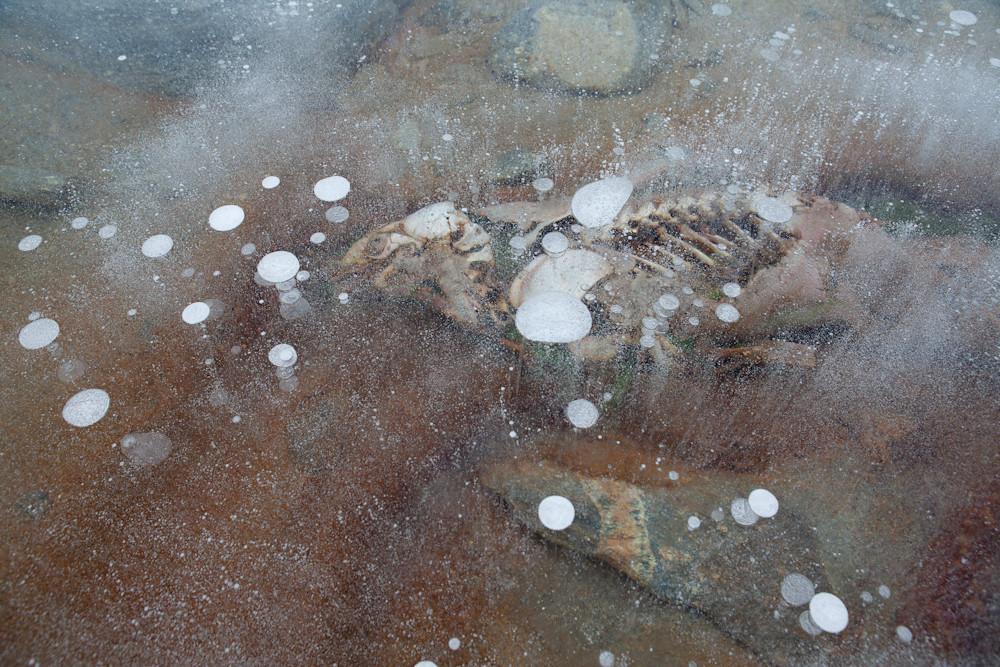 Seal decay bubbles.