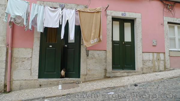 Cat in doorway. Alfama, Lisbon, Portugal.