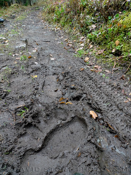 Multi-use trail.