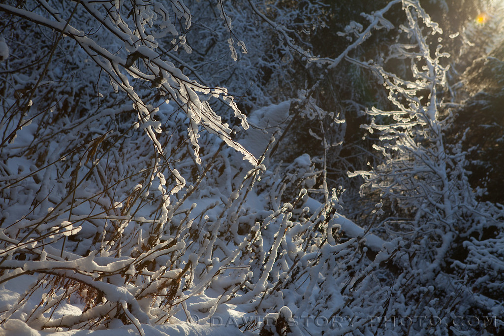 Snow weighs down branches along Resurrection Pass Trail.