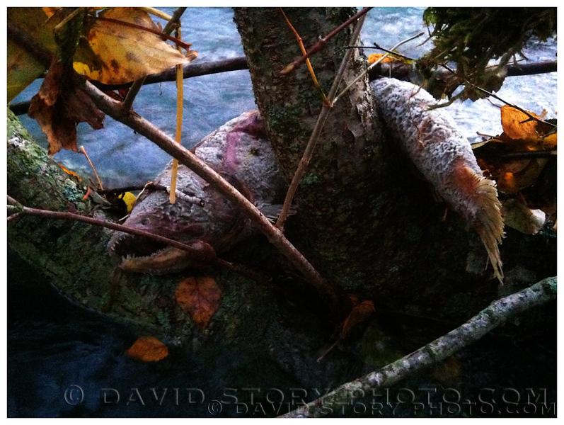 20121001_Fish_002.jpg