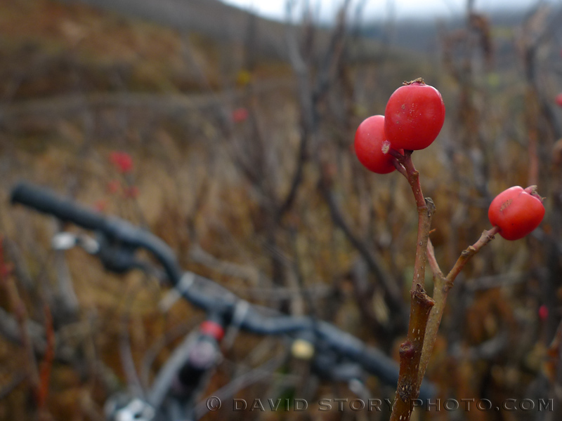 High bush cranberries above handlebars.