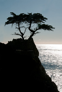 08 Mar 12. One of the most recognizable icons in CA is located along 17 mile drive about which I wrote earlier in the year. Known as the Lone Cyprus, it is a single tree that juts out over looking the Pacific Ocean. While stationed in Monterey attending Safety Officer School in the very early 80s I made my first of several trips out to see and photograph it. It was always accessible and there were never fewer that a dozen or so photographers there looking to capture their version of the old tree. I was no different. At that time there were no printed brochures provided for the entry fee discussing the tree and a couple dozen other sights, and access to the tree was very easy. Not so any more. Now, not only do you get the printed brochure with numbered pictures and short discussions about each stop along the drive, but you are now treated to a sign as you approach the tree informing you that the tree is now copyrighted and that should you dare to take a photo of it for anything other than your personal use that you will be sued! Here is my response to that!!!At the time of our visit the lighting was worse than terrible, so I elected to make that awful condition work for me and shot the tree as a silhouette as I really didn't have any other viable option. I've lightened the black just enough to let you see - barely - that it is now surrounded by a stone enclosure but removed the guy wires that are now securely? holding it upright, I guess. If you get to Monterey it is one of the sights you would likely enjoy seeing, and the 17 miles of ocean side and mansions are kinda fun to see, so do go visit while there. Just be careful what you shoot.  ISO 200; 1/800 sec @ f /14.