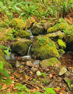 05 Oct 12.  Traveling along the eastern edge of Olympic National Park, we stopped at the Quilcene office of the Hood Canal Ranger District to inquire as to where we might go for some good shooting, especially of water falls. We were directed to the Falls View Park campground where we were told there was a wonderful falls to shoot. Arriving at the closed campground, we walked about a quarter mile to find the trail leading down to the falls. Quite steep in places, we made our way down a series of switchbacks expecting a spectacular view. What we found was a narrow river with a series of drops of perhaps a foot or so meandering along the side of the hill we had just descended. To say it was a disappointment would be the under statement of the year. We shot what we could before making the breath taking, in this case not beauty but out of breath - climb back up to the vehicle. Not finding the falls to be of even the slightest interest, I noted a very tiny creek? that was feeding into the river that held some interest for me, so I concentrated on that small stream, electing to shoot all the shots in HDR format. This is one of them, but I am presenting just one frame of the five as I think it holds up well on its own. Other than some heavy cropping at the top, this is the straight shot. D300s; 18 - 200; Aperture Priority; ISO 200; 1/sec @ f /16 on a tripod.