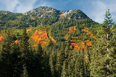 "11 Oct 12.  I had called the Wenatchee Ranger Station a couple days prior to our trip over Steven's Pass to ascertain the state of the fall colors. The report I got was that the individual on the other end of the line thought them to be rather nice. As we were heading up the pass I was beginning to think that the two of us had very different ideas about nice color, that is, until we crested the pass and started down the other side. It was then that my thoughts changed to we share similar ideas on nice color. While the western slopes were primarily still green, the eastern slopes were magnificently colored and that color remained all the way into Leavenworth. The trees were predominantly yellow, the ground cover went from bright yellow to bright orange with a little red thrown in to make it really interesting. This year we caught it right at its peak, and it is something to see at peak. During the morning while we were there, there were absolutely no clouds in the sky, so I've pasted in some of the afternoon vapors. Combining the early morning fog, the mid morning to late afternoon color, and the early afternoon spawning salmon, the day trip was one of our very best. Since I've been alluding to HDR images a time or two this week, this is an example of an HDR image that doesn't have the HDR ""look.""  Nikon D300s; Aperture Priority; 18 - 200; ISO 500; 1/500 sec @ f / 5.6 (middle of three)."