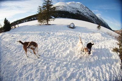 Dog rally in the sunny snow.