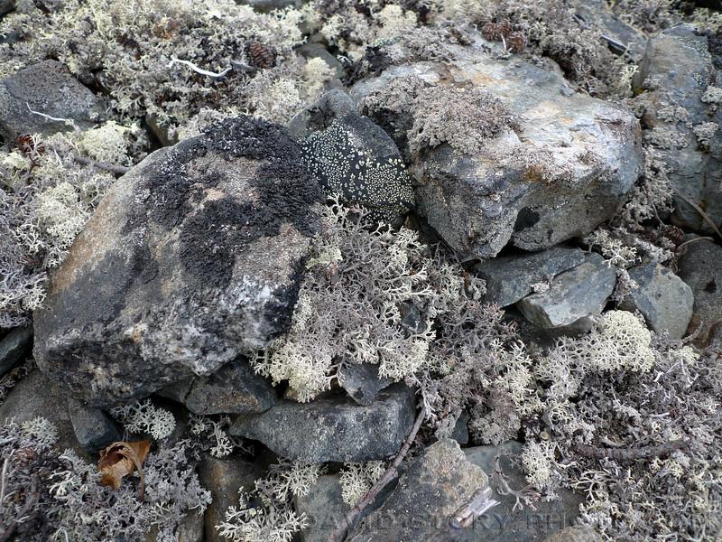 Lichen near Devil's Pass.