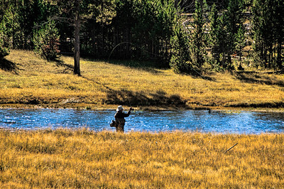 13 Nov 13. Most of the folks I know who are partial to Yellowstone National Park, among all the national parks, each have their favorite sections in the park and the park can easily be divided into several distinct regions. I have my favorite and my top three, in order, are the western entrance along the Madison River, the north eastern corner commonly know as the Lamar Valley, and the north entrance or the Gardner area. The Madison is a very long river and also quite shallow, such that a vast portion of it is prime trout fishing area, open only to fly fishermen. While we were visiting in late October we saw probably 50+ fishermen either trying their luck or just enjoying an idyllic time away from whatever they had been doing prior. I'm not much interested in fishing, but am seriously thinking about learning how to cast a fly line just for the shear pleasure of walking along/wading in that river communing with nature, be it with a flock of ducks or geese, a few swans, the occasional bison, or herd of Roosevelt Elk. While we were there we encountered them all, that is, on our second and third days in the park. On the first day there was a group of perhaps 250 bicyclists riding along the side or in the road yelling to each other resulting in not one single large animal to be seen. They were absent on subsequent days and the animals were plentiful! This didn't affect the fish apparently as the fly fishermen were abundant each day, morning and afternoon. Each time we've visited I've tried to capture the fly line as it is being whipped back and forth in the air before being allowed to alight on the water's surface. I had rather fortunate luck this time around and was able to record quite a few shots of the sunlight sparkling on the line. Today's submission is of one of those fishermen casting his line out into the Madison River while also enjoying his pipe. To get this final image I first used a piece of software to tame the glare of the morning sunlight, then moved that output to another program and applied a curves layer to add a bit of global brightening, then ran a filter to enhance the texture somewhat, and then used a hue/saturation layer to strengthen the yellows but controlled that application with a mask to limit where it occurred. Then of course the normal conversion for output for sharing. Nikon D300s; 18 - 200; Aperture Priority; ISO 200; 1/400 sec @ f / 7.1.