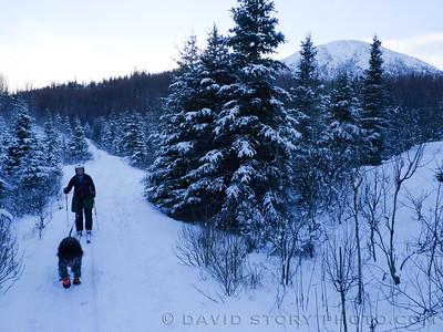 Skijoring with Capella.