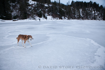 Ice skating bores Biscuit. Grant Lake, Moose Pass, AK.