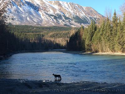 20140424_River_Dog_002
