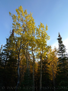 Fall lights up the tree tops in Cooper Landing, AK.