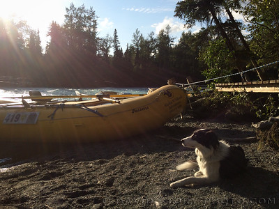 It is a hard life sunning next to the rafts.