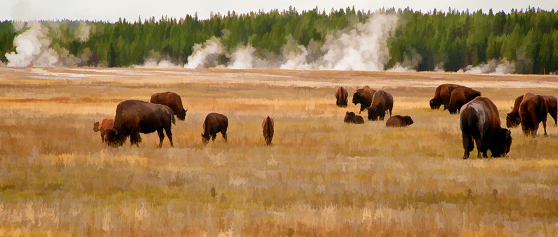 24 Apr 14.  With the snow now departing the Yellowstone area, it will soon be birthing time. Don't know if we'll make it there this year for the event, but if not, I certainly plan to be there in 2015 to hopefully capture the birth of a bison. That would be a fun thing to do, and if I were lucky enough to record the birth of one unusual looking one like in the picture - really dreaming now - I just might be inclined to name it something memorable. Wouldn't quite be the same as helping my cousin whose calves I can watch grow up on a regular basis, but then again, it would be a much rarer experience, and one I don't think I'd quickly forget! These guys were enjoying a leisurely breakfast not far from a very active geyser with some of the herd members much closer to the activity than were those you see in the image. My initial thought was that a longer lens than that which I typically use would make for a really good shot, but as it turned out the better shots were with a wider viewpoint, so I used the standard 18 - 200 in a wide angle setting to take in the broader expanse and then cropped off from the top and bottom edges to get the exact perspective I wanted. The hardest part of the shoot was restraining myself from walking out into the herd. While I didn't have any qualms about my safety, I simply didn't want to disturb the animals who were already dong a very fine job of posing for me, even if that wasn't their intent. This is obviously a creative image, in the format of a water color, and a look I liked even better than the original once I was finished playing with it. Heading back to West Yellowstone for a week in early May; it will be our first time there in early Spring, and I'm anxious to get there to see how it looks in that season as we've only seen it in the fall in all our previous visits. Who knows, maybe we'll even get to see that hoped for birth. Nikon D300s; 18 - 200;  Aperture Priority; ISO 125; 1/250th sec @ f / 8.