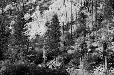 16 Dec 14.  Today we look at the last of our B&W versions of the Tumwater Canyon image. This time I took the original image and converted it to a B&W base and then adjusted it with a series of 11 curves adjustment layers, with one layer for each of the 11 zones found the the Zone System. If this is something new to you, click here for a good overview. The individual adjustment of each layer was accomplished while looking at the image; it was all I did. Look closely at the ground cover in all the versions. Compare this result with the other three B&W versions as well as the two color if you like. Now make your choice as to what approach works best. Here is a link if you are interested in the software I employed to get today's version. IF you are a B&W kind of individual, you may find this piece of software a good investment; I have, and I use it frequently, but if you don't dabble in B&W you may well find little use for it. Same technical info as before, after all, it is the same image once again. Nikon D300s; 18 - 200; Aperture Priority; ISO 320; 1/500 sec @ f / 8.
