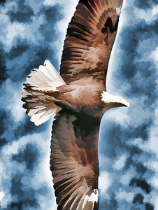 06 Feb 14.  After working up 8 images for something creative for today, I settled on a photo of a bald eagle that I shot as the bird flew directly overhead as it was checking us out before making a decision as to whether it was safe to roost in the tree right next to the vehicle. It decided it wasn't the first time around, then changed its mind and elected to return from where it had originally launched out. I took several shots, none of which were quite what I wanted, but standing in the middle of a road has its limitations. I made three versions of this shot, two creative and one not so. One of the creative images looks very much like the non-creative, just somewhat more dramatic. The other creative attempt, the one I'm sharing, was designed to look a bit like what I think a piece of our local Indian art would resemble based on our many visits to the art outlet called Northwest Native Expressions in Blyn, WA. This is a somewhat simple rendition of a eagle but you will no doubt immediately recognize it for what it is. This was primarily a simple one step conversion but I did have to add the eye back in after the manipulation. Nikon D300s; 18 - 200; Aperture Priority; ISO 200; 1/500 sec @ f / 9.