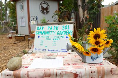 Photo by Joan Cusick for Oak Park Sol community garden