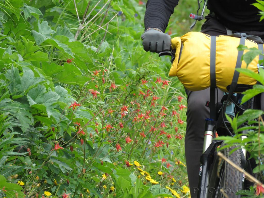 Bikepack past Columbine.