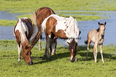 A Splash of Freckles' Foal
