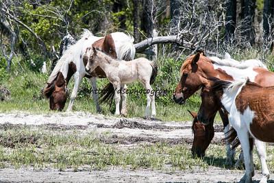 A Splash of Freckles' 2015 Foal