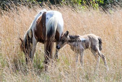 Splash of Freckles' 2015 Foal