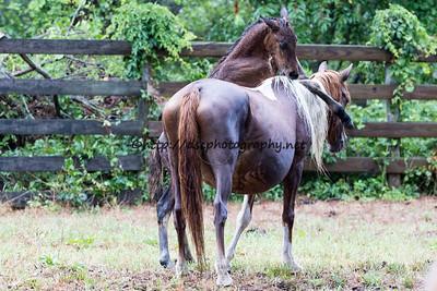 America's Sweetheart & Colt