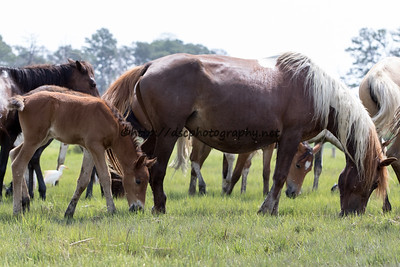 America's Sweetheart and Colt