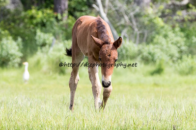 America's Sweetheart's Colt