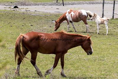 Anne Bonny & Foal with Ken