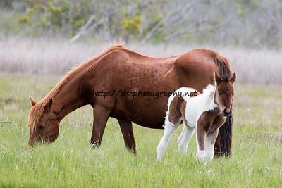 Beautiful Dreamer's 2015 Foal