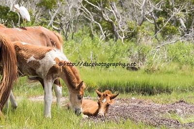 Cinnamon Blaze's and CJ Samm'n's Foals