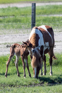 Checkers/Giraffe's Colt