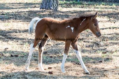 ET's Foal