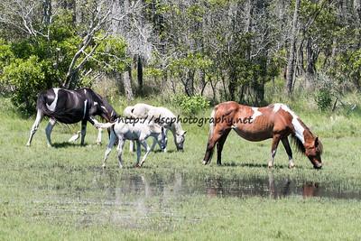 Baybe & Ella's 2015 Foals