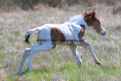 Galadriel's 2015 Foal